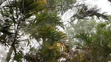 Regen läuft über das Fenster mit Naturhintergrund