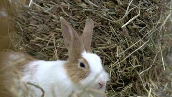conejo sentado en el heno