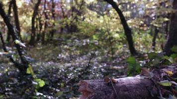 primer plano de árbol caído