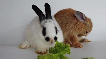 coelhos adoráveis em fundo branco