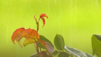 lloviendo sobre hojas