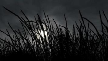 Dark Grass Silhouette