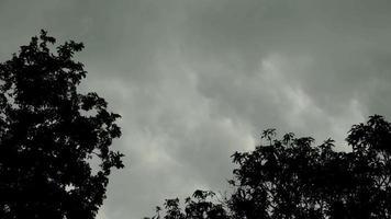 silueta de las copas de los árboles