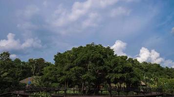 nuvens se movendo sobre uma grande árvore video