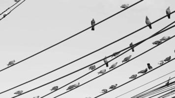 pájaros en blanco y negro en un cable eléctrico