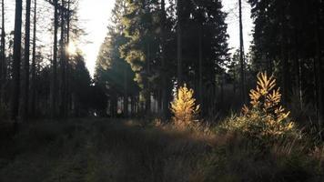 raios de sol iluminando parcialmente a floresta