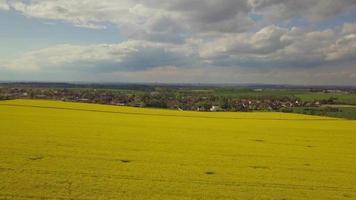 Luftaufnahme eines gelb blühenden Rapsfeldes in 4k video