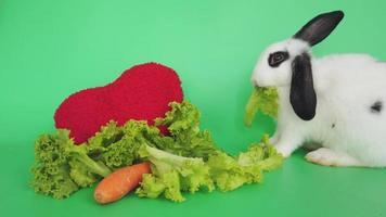 Conejo blanco sobre fondo verde comiendo verduras