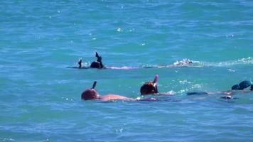 snorklers no oceano pacífico video