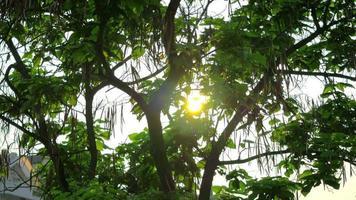 The sun shines thru green trees 4K stock video