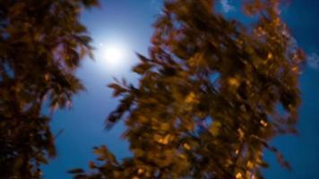 timelapse de una luna llena pasando detrás del árbol 4k stock video