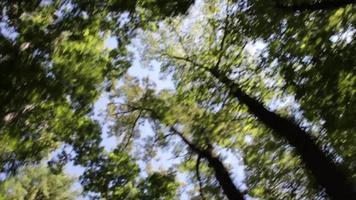 los árboles vuelan por encima