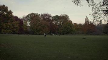 campo abierto del parque central