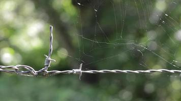 versteckte Spinne