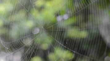 Spinnennetz und Wind 02