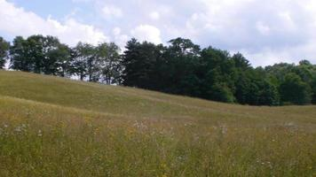 Beautiful rolling hills covered by a meadow