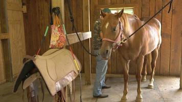 Wide Shot of Person Grooming Horse 4k
