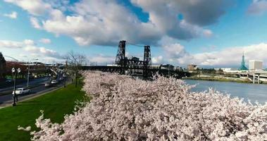 portland oregon cherry blossoms park e river bridge 4k aerotransportado