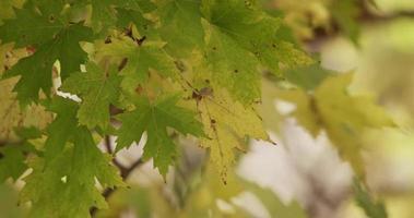 hojas verdes y amarillas con movimiento suave en 4k