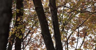 texturerad mall med hundratals små löv rör sig långsamt i 4k