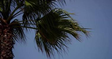 Close up of panning shot showing a detail of palm foliage in 4K