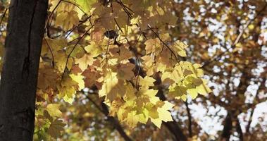 moldura da natureza da árvore da floresta com folhas amarelas e árvores desfocadas no fundo em 4k