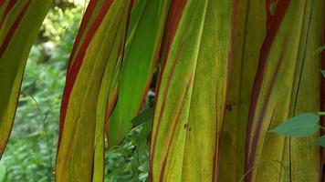 largas hojas rojas y verdes movidas por el viento
