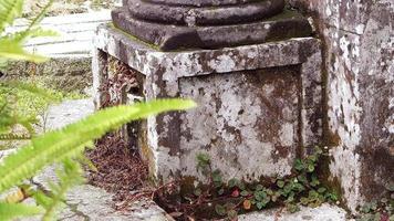 coluna da capela com planta desfocada em primeiro plano video