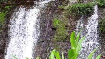 duas pequenas cachoeiras com plantas aquáticas video