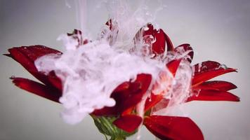flor roja y tinta blanca