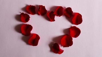 moldura de pétalas de coração stop motion