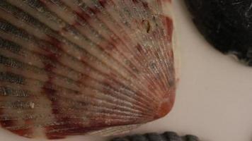Imágenes de archivo giratorias tomadas de conchas marinas - conchas marinas 011