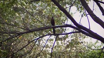 kleiner Vogel im Zoo