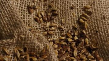 dose rotativa de cevada e outros ingredientes de fabricação de cerveja - fabricação de cerveja 233