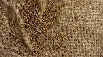dose rotativa de cevada e outros ingredientes de fabricação de cerveja - fabricação de cerveja 219