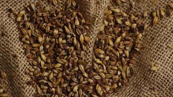 dose rotativa de cevada e outros ingredientes de fabricação de cerveja - fabricação de cerveja 222