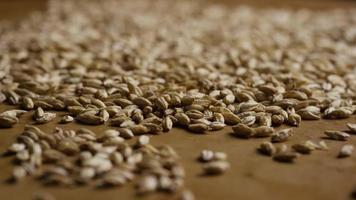 dose rotativa de cevada e outros ingredientes de fabricação de cerveja - fabricação de cerveja 127