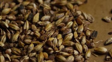 dose rotativa de cevada e outros ingredientes de fabricação de cerveja - fabricação de cerveja 082