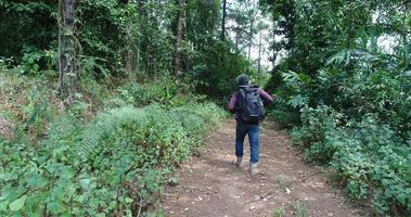 joven, senderismo, en, selva tropical, con, mochila