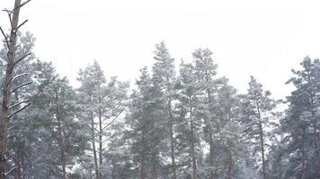chutes de neige dans le parc forestier. paysage d'hiver dans un parc flou couvert de neige.