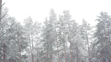 chutes de neige dans le parc forestier. paysage d'hiver dans un parc flou couvert de neige. vidéo hd