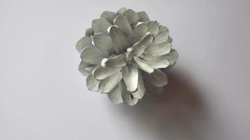 pomme de pin peinte en blanc