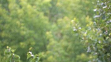 gotas de chuva com fundo de vegetação verde