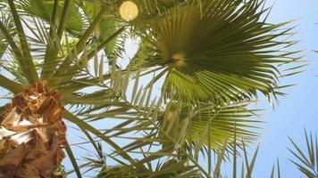 palmeras contra un hermoso cielo azul video