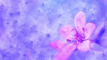 sfondo fiore rosa video