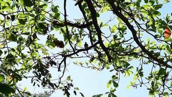 una paloma posada en un gran árbol