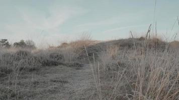 Low Panning Shot Up Between Frozen Grass Up the Hill