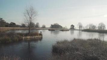 uma árvore solitária ao lado de um lago congelado video