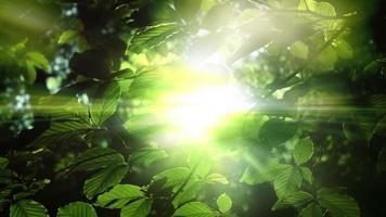 luz do sol e folhas verdes das árvores