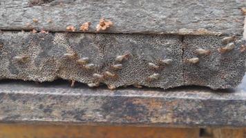 docenas de termitas caminando